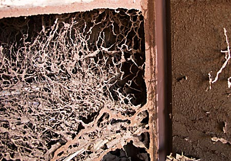 Termite Damage to Walls