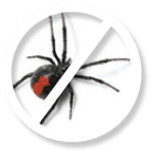 Spiders Pest Control Sydney