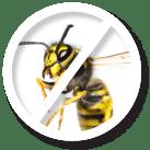 Wasp Pest Control Sydney