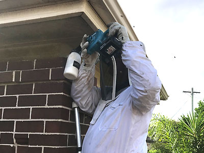 Bee Removal