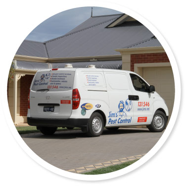 Pest Control Northern Beaches